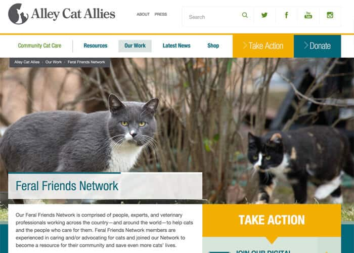 Alley Cat Allies - Best Nonprofit Website Design