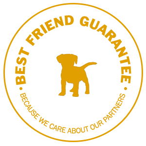 2 Dogs Media Best Friend Guarantee