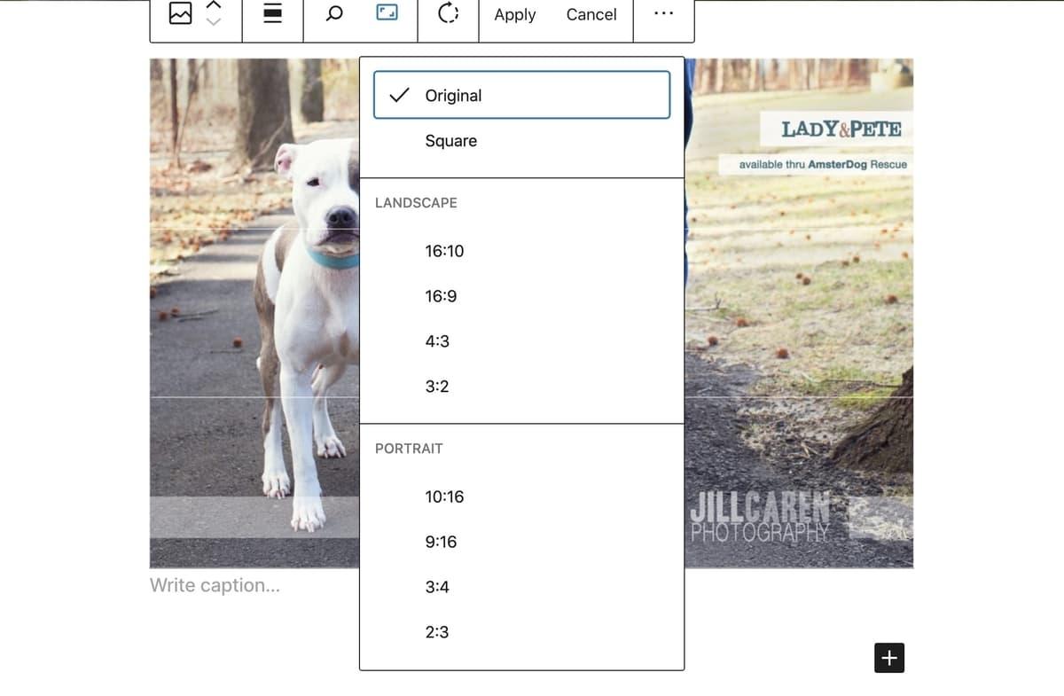 wordpress 5.5 crop images in editor